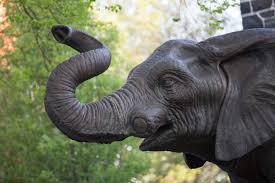jumbos for jumbos tufts elephant conservation alliance tufts