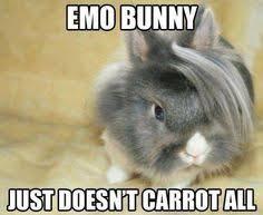 Pun Meme - animal pun memes comics and memes