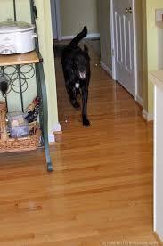 dog and hardwood floors best dog shoes to protect hardwood floors carpet vidalondon