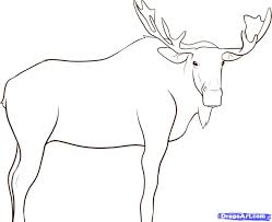 how to draw a moose face free download clip art free clip art