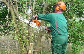 garten und landschaftsbau ausbildung ausbildung zum gärtner fachrichtung garten und landschaftsbau m