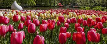 keukenhof flower gardens keukenhof garden tour incl transportation holland pass