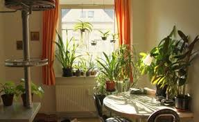 Indoor Home Decor Exclusive Indoor Plant Décor Ideas For Homes Weddings Eve