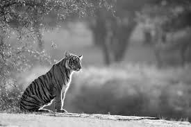black white warwick wildlife photography