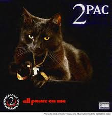 cat photo album 12 classic hip hop album covers all cat remixed 12 pictures clip
