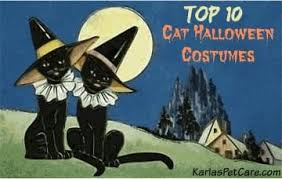 Halloween Costumes Cats 10 Halloween Costumes Cats Karla U0027s Pet Care