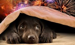 Good Backyard Pets July Fourth Safety Tips For Pets Blog For The Love Of Dogs Llc