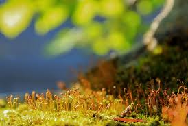Moss Moss Free Pictures On Pixabay
