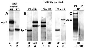 Anti Flag Affinity Gel Structurally Related Tpr Subunits Contribute Differently To The