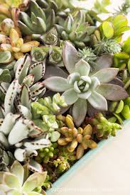 planter for succulents how to plant a succulent garden in an ikea cart succulents and