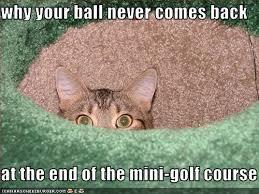 we knew it cat golf meme mini golf pinterest golf and meme