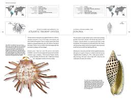 the book of shells a life size guide to identifying and