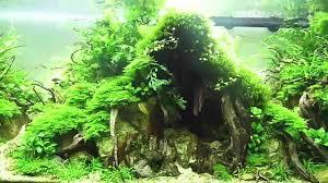 japanese aquascape image result for takashi amano aquascaping aquarium pinterest