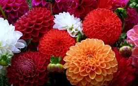 Flower Wallpaper Colorful Flower Wallpaper Hd Download For Desktop U0026 Pc