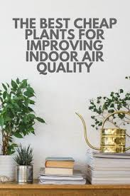 best plants for air quality the best cheap plants for improving indoor air quality jpg