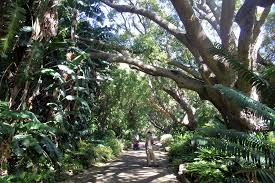 Kirstenbosch National Botanical Gardens by How To Plan Your Visit To Kirstenbosch National Botanical Gardens