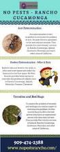 best 25 rat infestation ideas on pinterest interesting fun