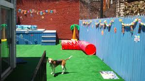 Dog Playground Equipment Backyard by Welcome To Buddy U0027s Dog Den A Dog Paradise In The Concrete Jungle