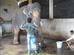 Blind Men And The Elephant Story For Children 35 Inspiring Rescue Stories From 35 Years Of Peta Peta