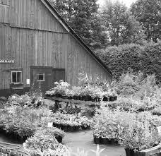 cr馘ences cuisine 6 6 8 perennial pleasures nursery