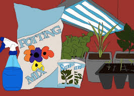 how to grow an indoor herb garden a guide to successfully