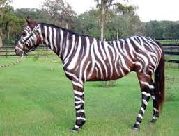 Halloween Costumes Zebra 25 Horse Halloween Costumes Ideas Horse