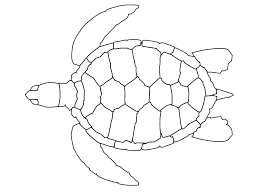 free clipart sea turtle outline pencil drawing print image sea