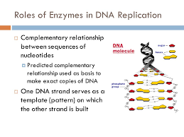 chapter 9 3 grade 10 biology spring 2011 the replication of dna
