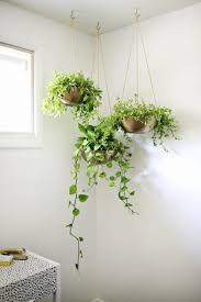Hanging Pictures Ideas by Indoor Garden Idea Hang Your Plants From The Ceiling U0026 Walls