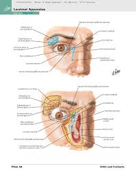 Basic Anatomy Of The Ear Atlas Of Human Anatomy Including Student Consult Interactive