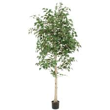 7 potted white birch tree unfluffed in import free