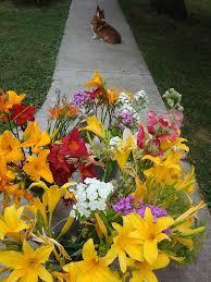 Cut Flower Garden by Cut Flower Gallery Small Frye Farm