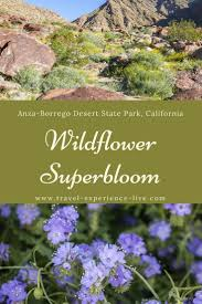 15 best desert wildflowers images on pinterest wildflowers