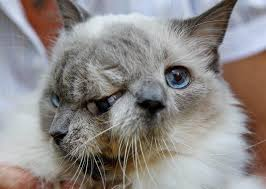two faced cats how do they get that way