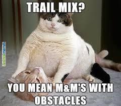 Random Cat Meme - cat memes picmia