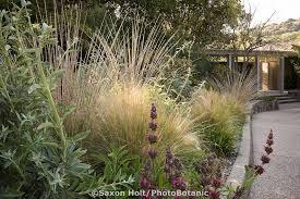 holt 775 250 tif photobotanic stock photography garden library