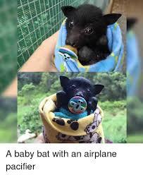 Bat Meme - 25 best memes about baby bats baby bats memes
