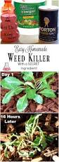 How To Remove Weeds From Patio Best 25 Vinegar Weed Killers Ideas On Pinterest Weeds Vinegar