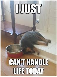 I M So Tired Meme - i m dog tired tired dog and animal