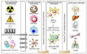 biomedicines free full text t cell manipulation strategies to