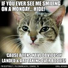 Cat Alien Meme - years i tell ya adopted adopted mcas funnies pinterest