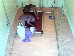 indestructible dog bed youtube