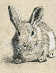 rabbit sketch charcoal chalk on craft paper lelia flickr