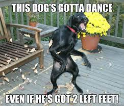 Dancing Dog Meme - dancing dog memes quickmeme