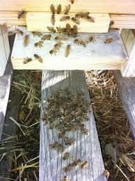 backyard bee hive blog december 2013