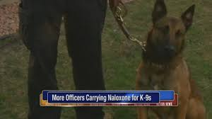 belgian sheepdog massachusetts new drug kits save police dogs from opioid overdoses 6abc com
