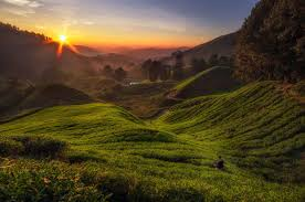 trails for trekking in the cameron highlands