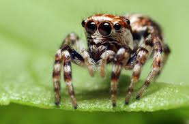 what does marijuana do to spiders mental floss