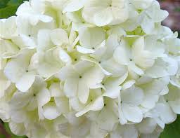 Low Maintenance Plants And Flowers - my secrets to a low maintenance garden deb u0027s garden deb u0027s