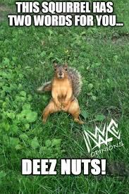 Squirrel Nuts Meme - hilarious squirrel nuts meme image quotesbae